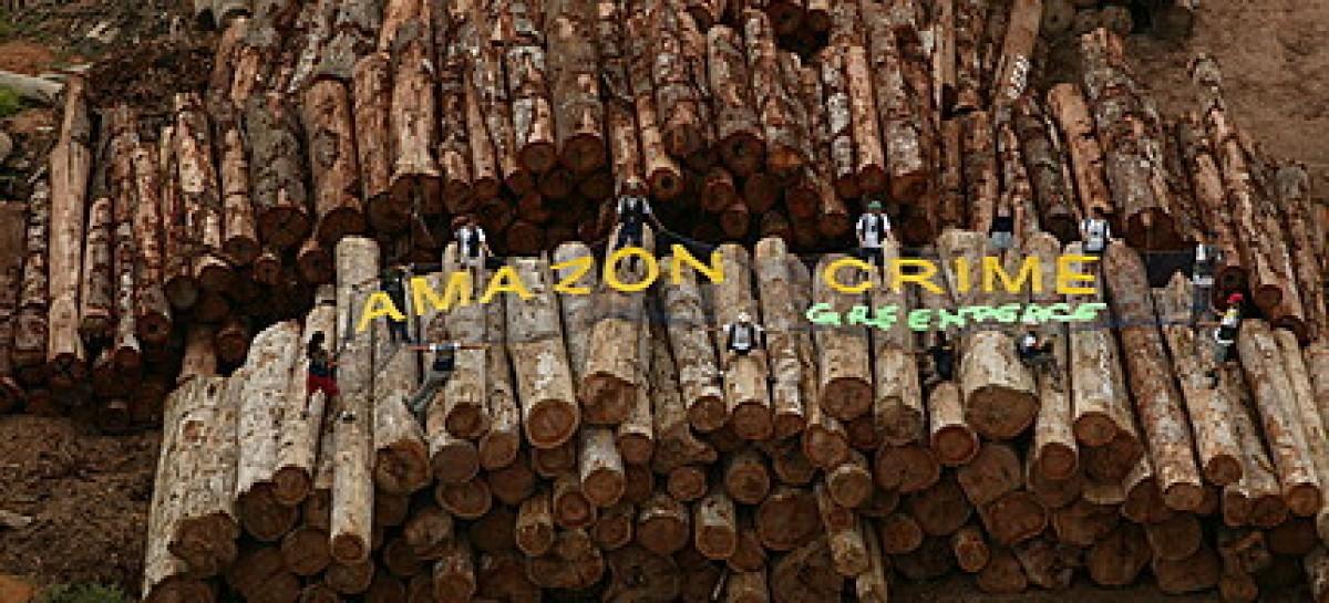 Estados Unidos É O 1º País No Mundo A Proibir Comércio De Madeira Ilegal