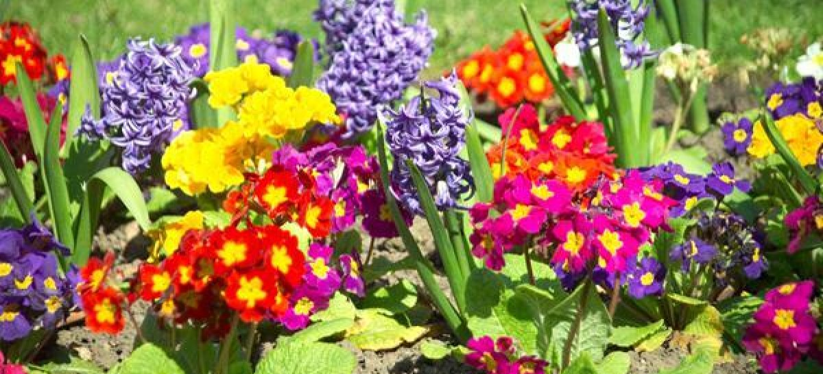 As Plantas Trazem Beleza E Qualidade De Vida Para Sua Casa