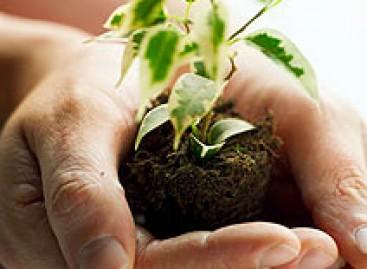 Plante uma árvore e faça a diferença