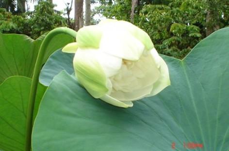Paisagismo, Flores por todos os lados