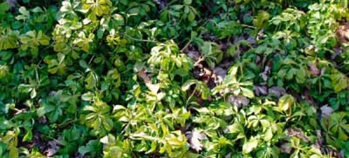 Paisagismo, Plantando forrações