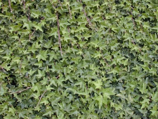 parede-de-plantas