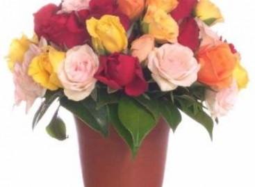 Traga a beleza das flores para dentro de casa