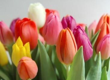Junho é o mês das tulipas