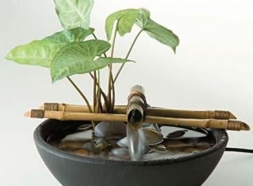 Benefícios das Fontes de Água