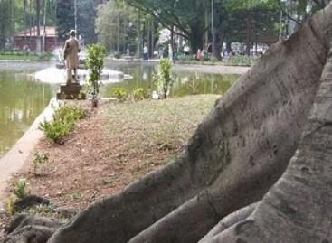Jardim Charmoso com Árvore de Raiz Aparente