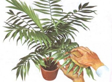Limpeza das Plantas