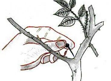 Seu Jardim Saudável e Bonito com Acupuntura Vegetal
