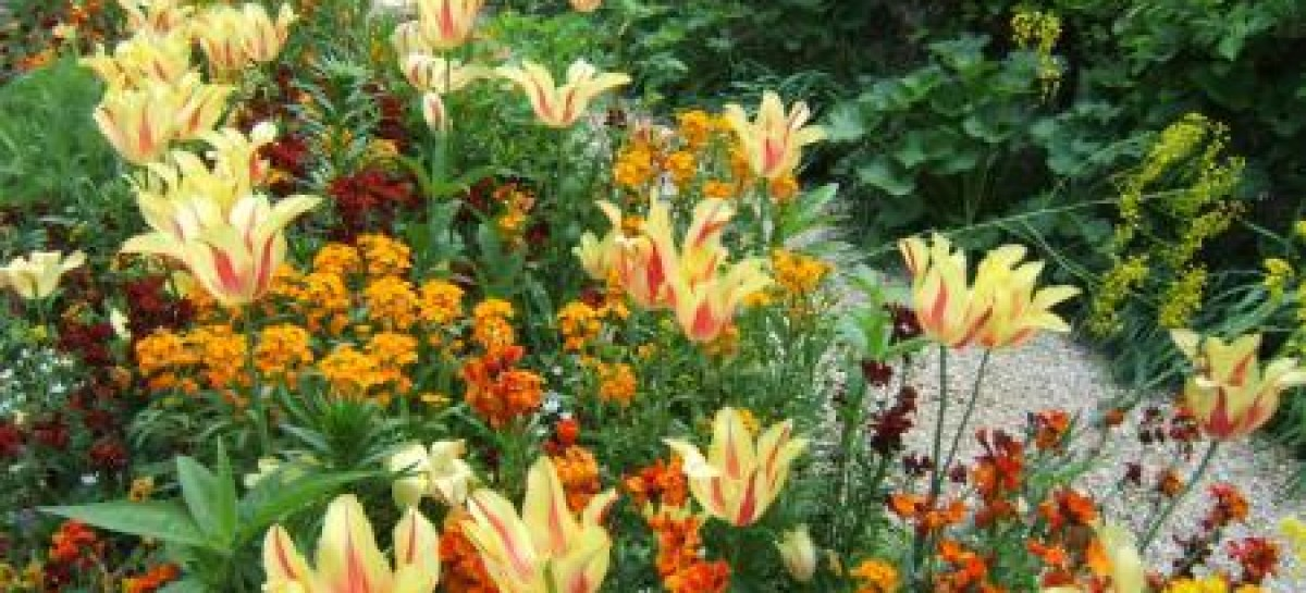 Deixe o Jardim Muito mais Harmônico com Cursos de Jardinagem
