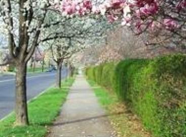 Calçada Arborizada