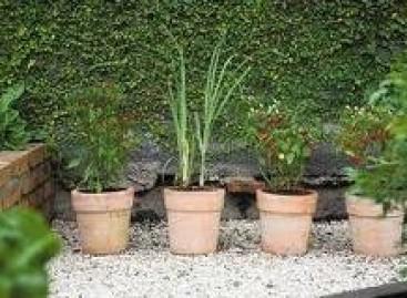 Jardim-Farmácia; Beleza e Funcionalidade