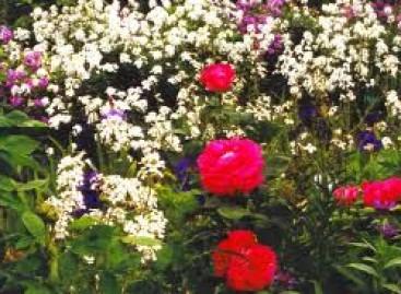 Plantas Bonitas Também no Inverno
