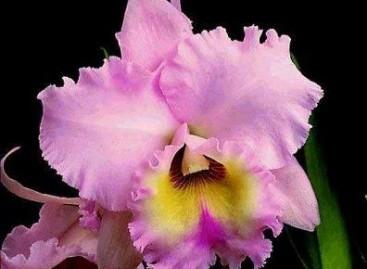Exposição sobre orquídeas