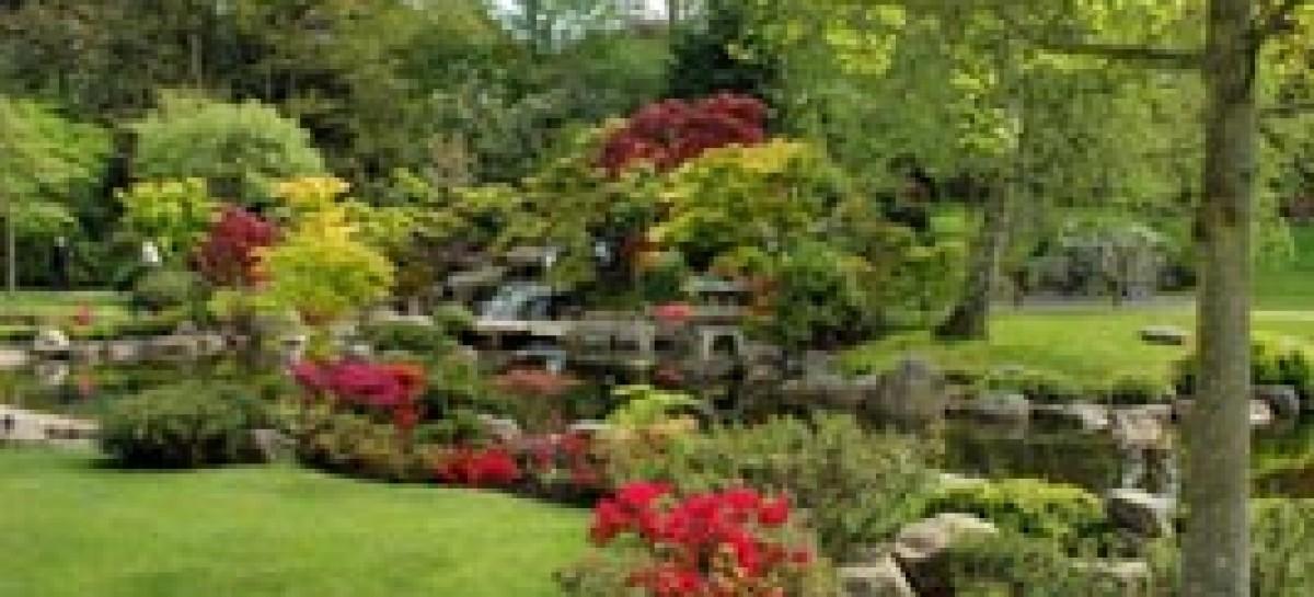5 passos para adubar corretamente seu jardim