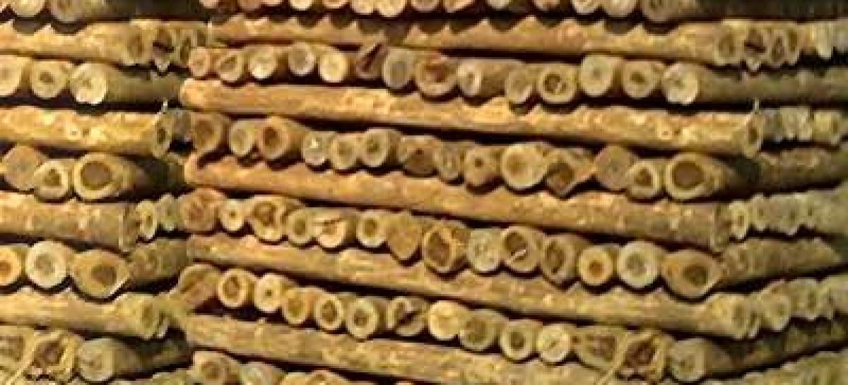 A importância da madeira tratada