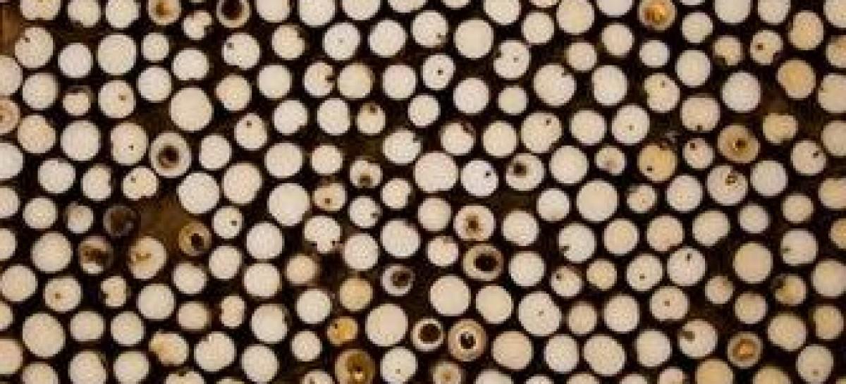 Placas de sementes de açaí