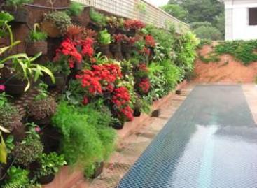 Como cuidar das plantas durante o outono