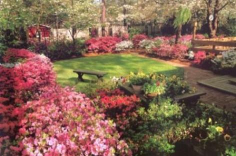 Azaleias no jardim