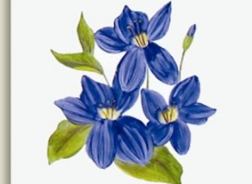 Cerâmicas floridas