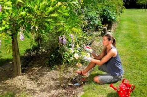 Prepare seu jardim para a primavera