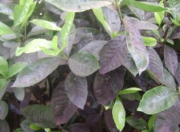 Como prevenir as pragas no jardim
