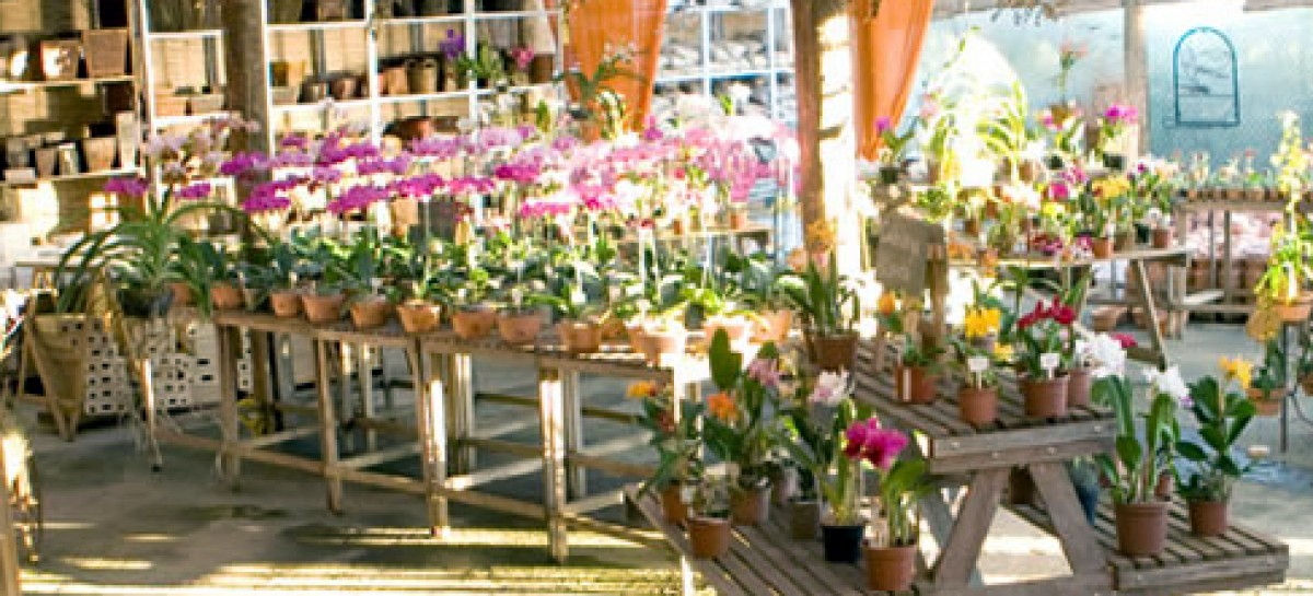 Exposição de Orquídeas & Paisagismo