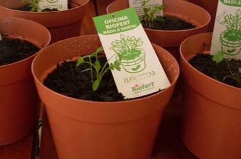 Curso gratuito sobre cultivo de mini-hortas