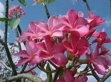 Árvore florida
