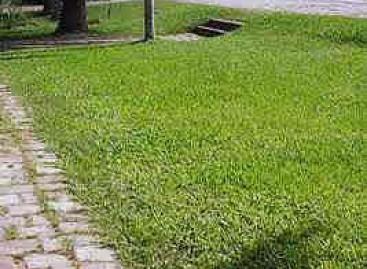 Tipos de grama para jardim