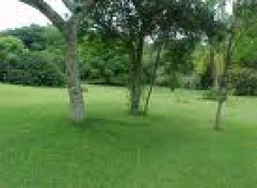 Sugestões para o seu gramado ficar ainda mais bonito!
