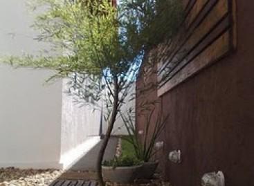 Paisagismo: Bambu-Mossô Baixinho