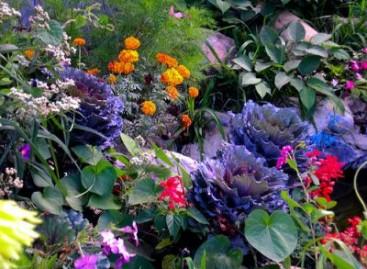 Jardim Florido o Ano Todo