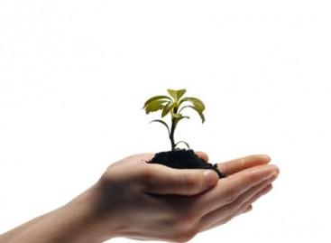 Futuro Jardim; Como Plantar Sementes