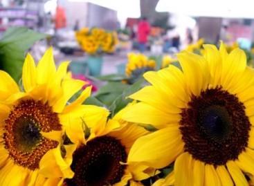 Feira de Flores da Ceagesp