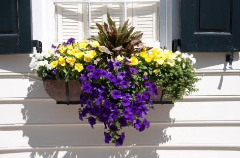 Jardineiras: cuidados para deixá-las lindas o ano inteiro