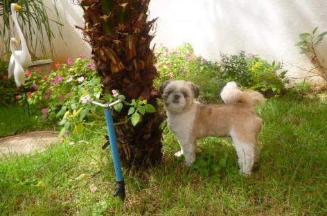 Plantas e animais: dicas para uma boa convivência