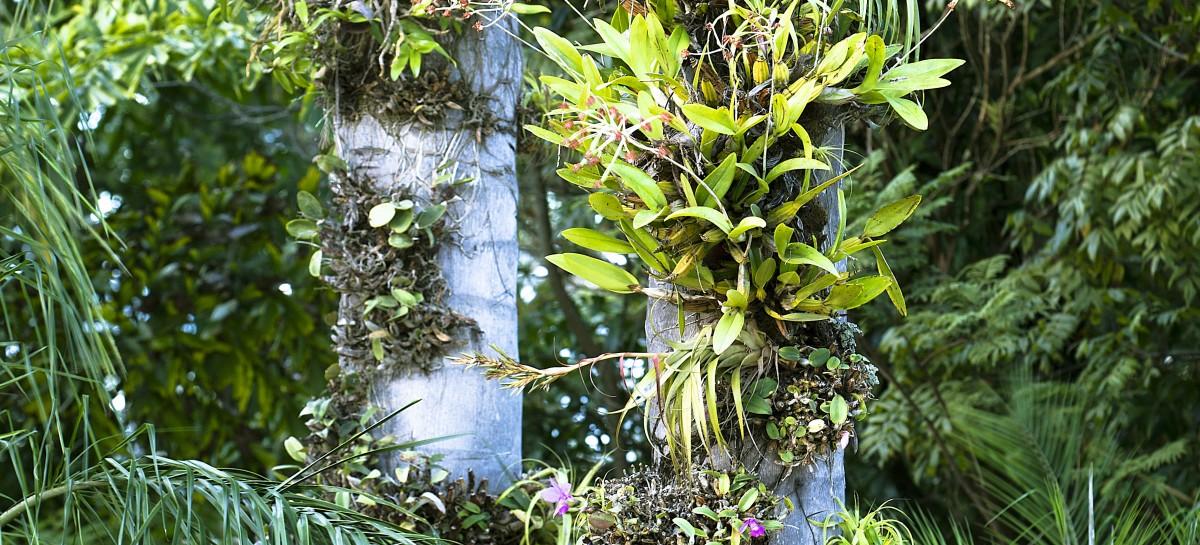 Plantas epífitas, dicas para aproveitar sua beleza